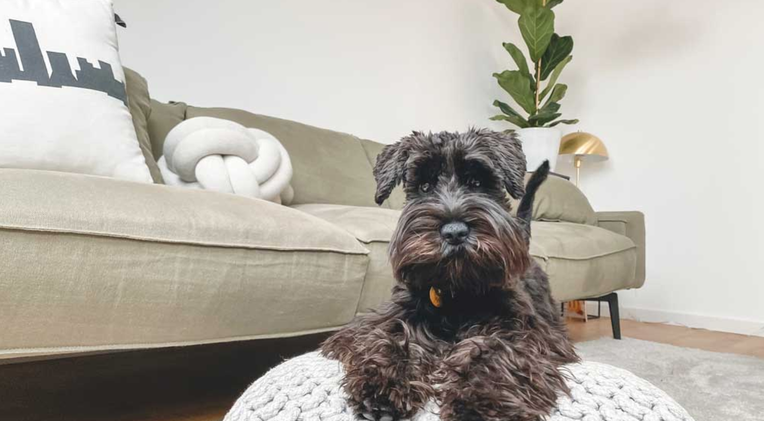 Renting with pets: 5 top tips for finding the perfect pet-friendly home